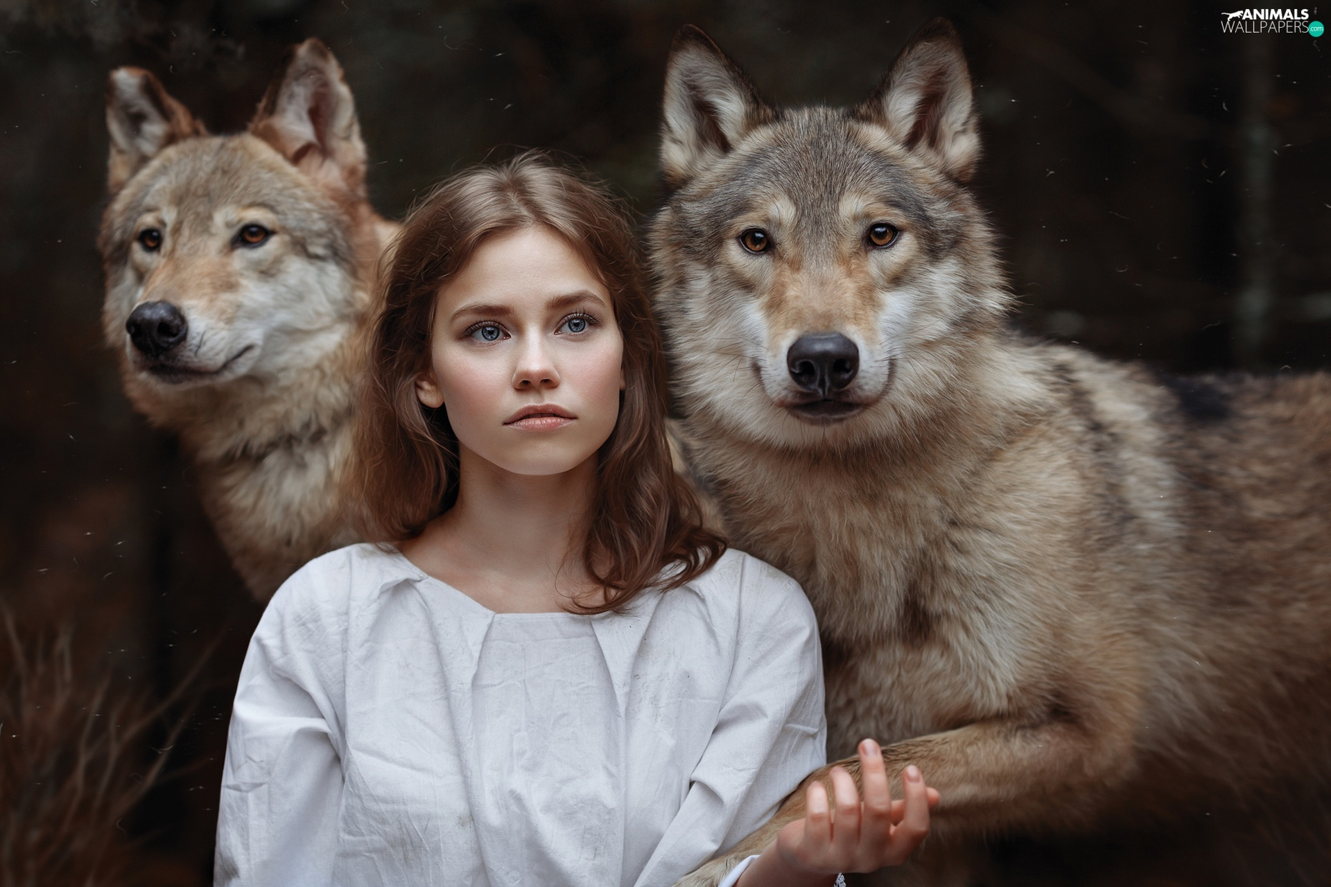 wolves, girl, Two cars