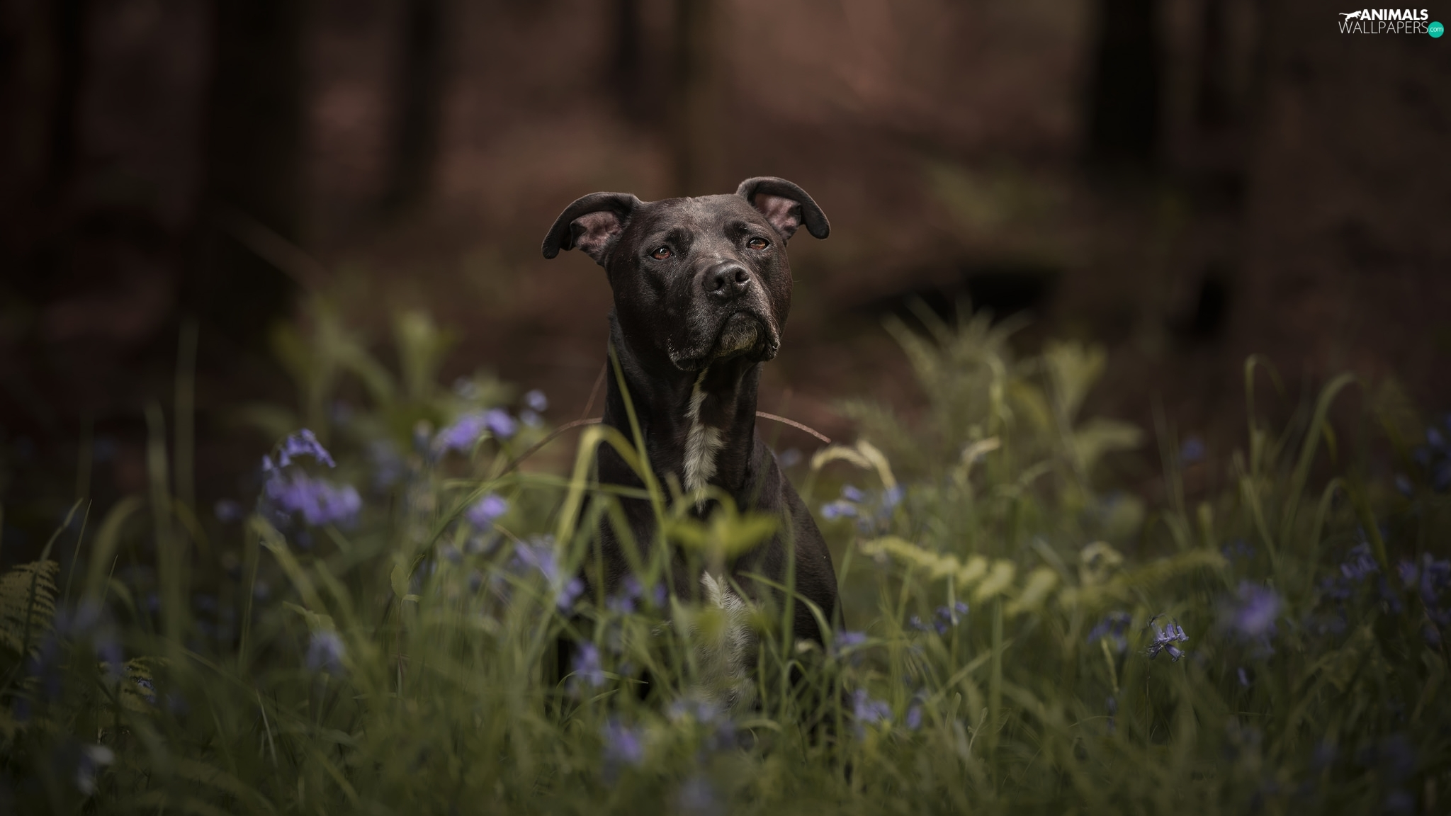 Black, grass, Flowers, dog