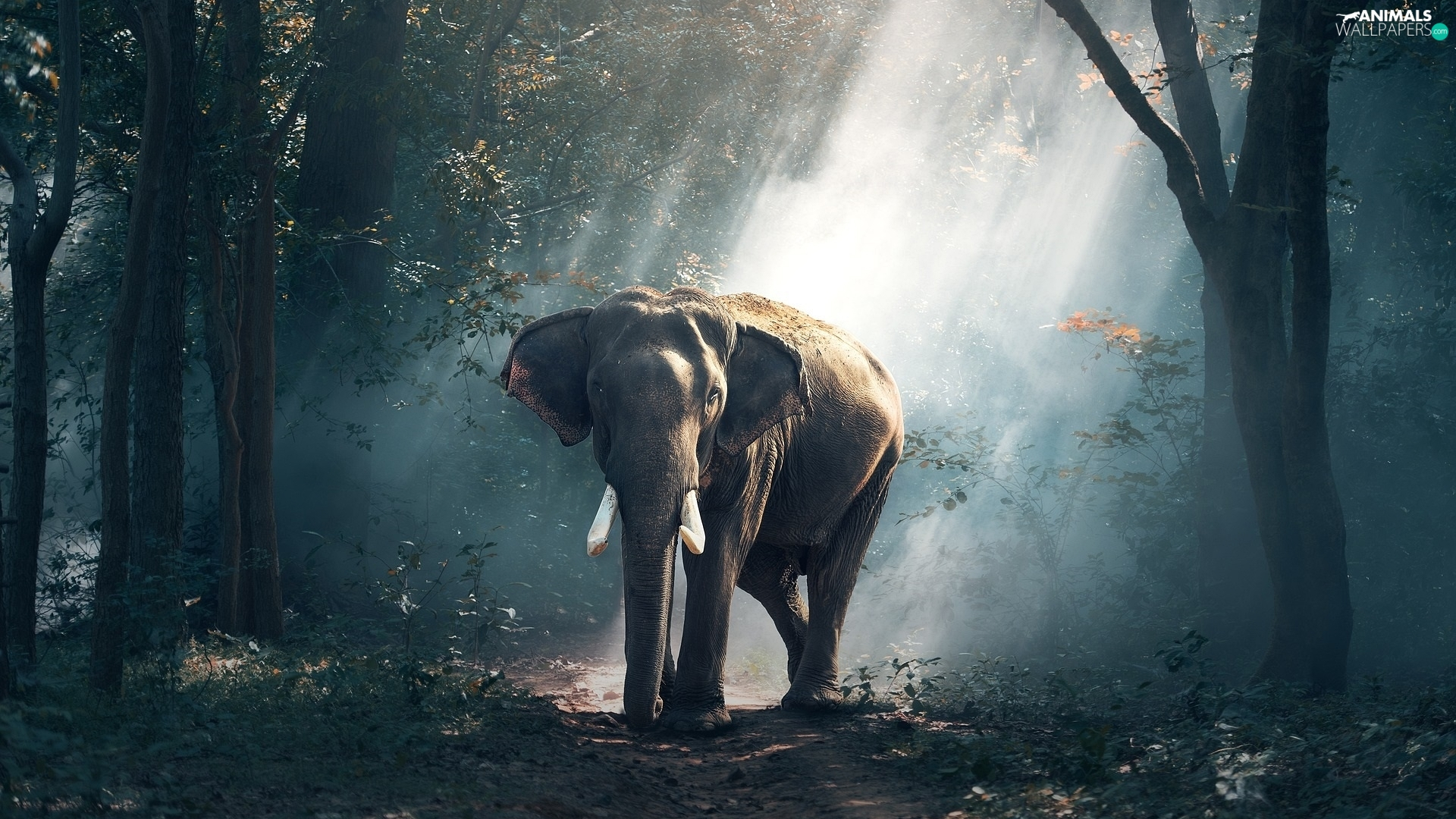viewes, light breaking through sky, forest, trees, Elephant