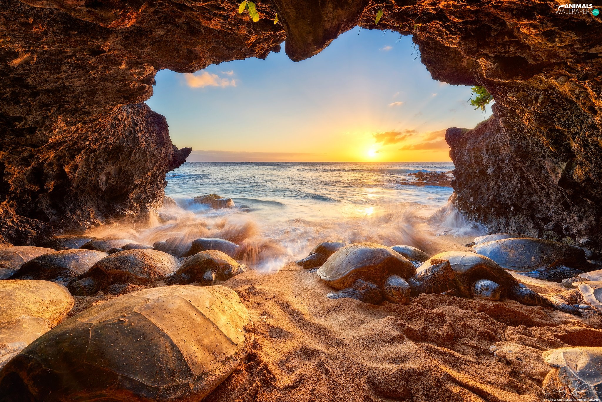 Sea Turtles, Great Sunsets, Pacific Ocean, cave, Aloha State Hawaje