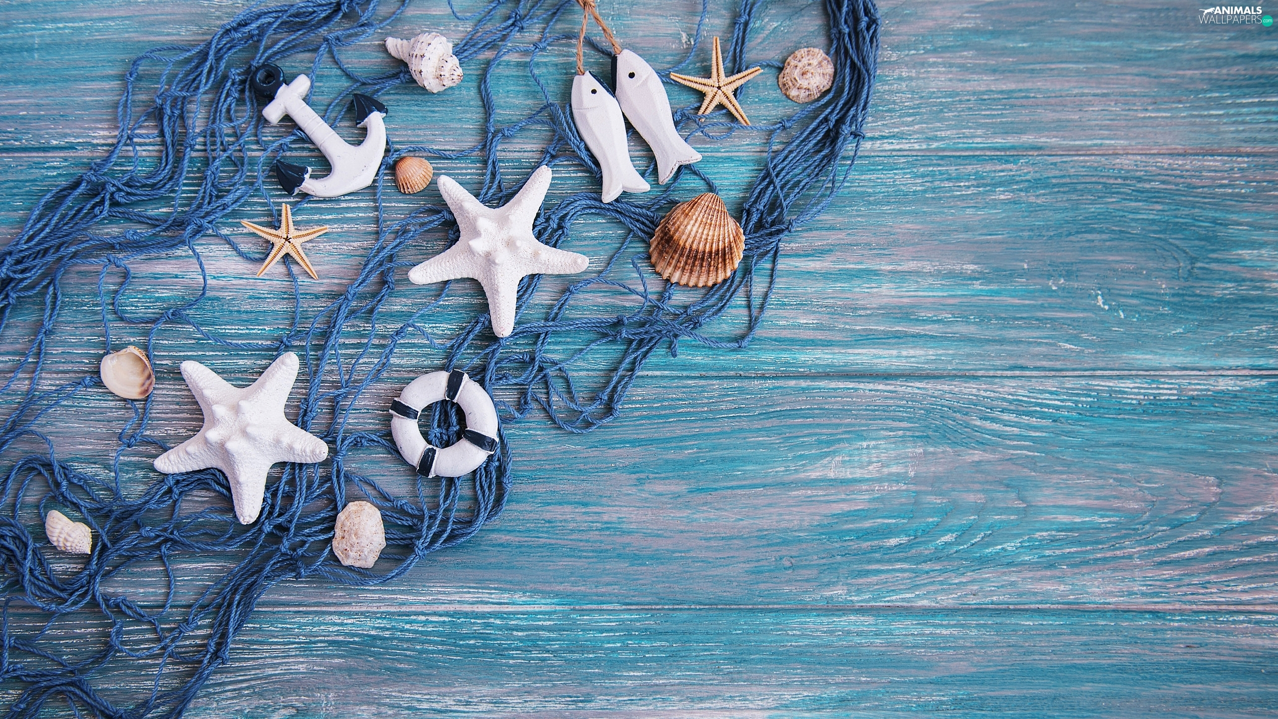 strings, Blue, net, Shells, boarding, composition, anchor, Blue, starfish