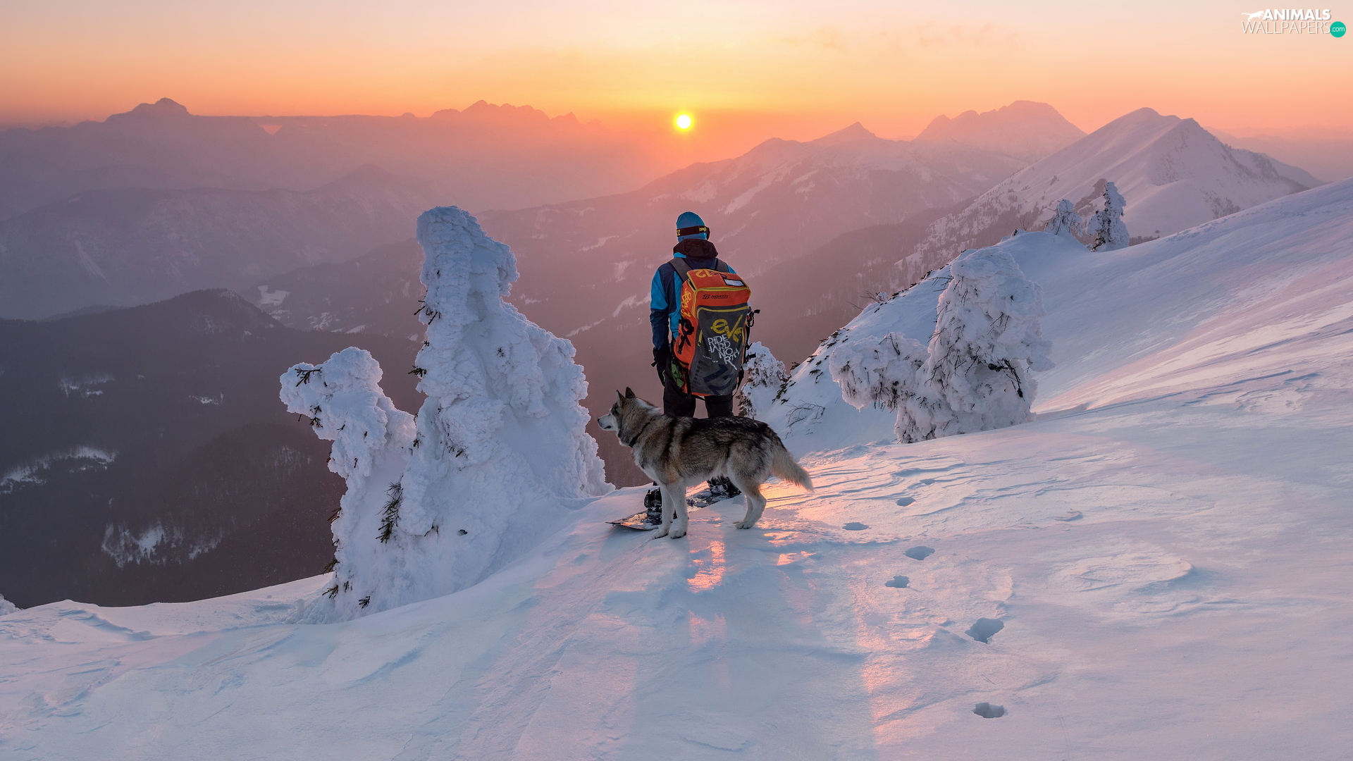 winter, Mountains, Snowy, trees, dog, Great Sunsets, a man, snowboarder, viewes