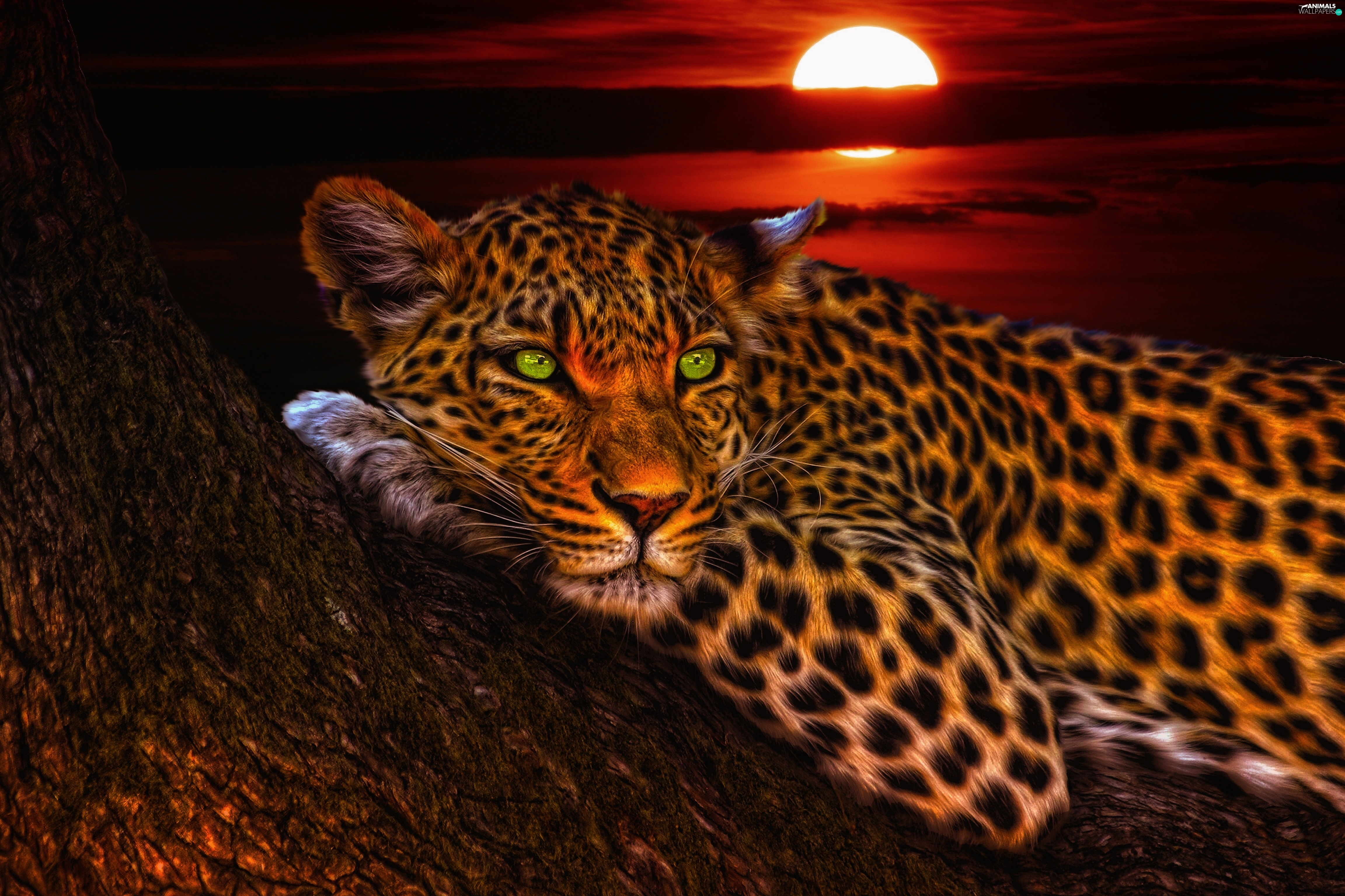 Great Sunsets, Leopards, trees