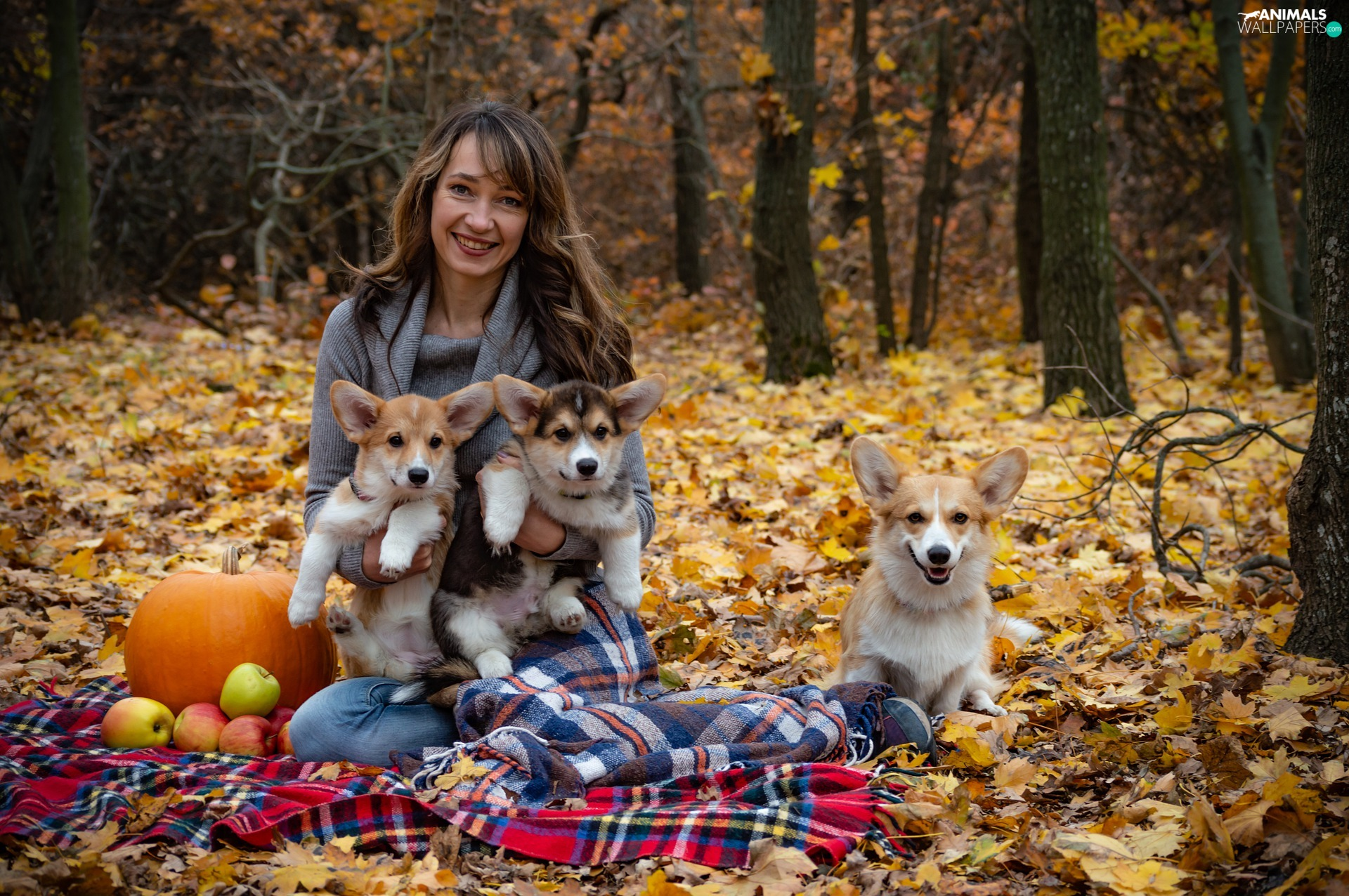 Women, Dogs, pumpkin, Welsh corgi pembroke, Three, coverlet, Leaf