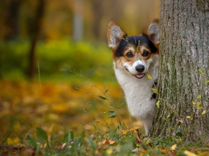 doggy, trees, autumn, muzzle