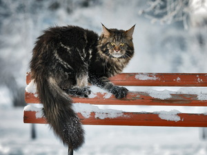 erect, winter, Bench, cat