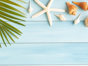 starfish, boarding, Palms, Shells, Leaf
