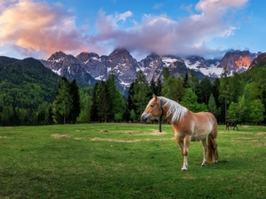 Mountains, Horse, bloodstock, car in the meadow