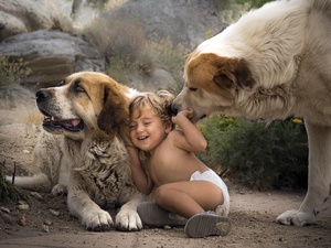 Dogs, play, Central Asian Shepherd, Kid