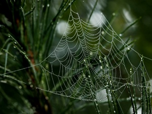 grass, Water drops, Close, Web