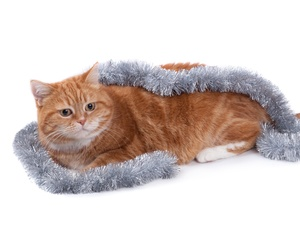 ginger, chain, decorated, cat