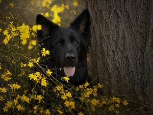trees, Flowers, Black German Shepherd Dog, muzzle, dog