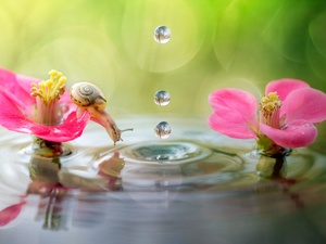drops, water, Flowers, snail, water