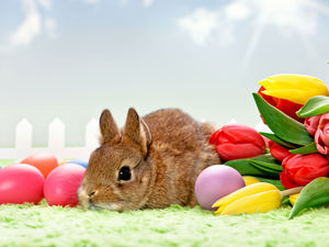 Rabbit, eggs, Easter, Tulips