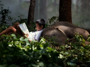 Elephant, boy, Book