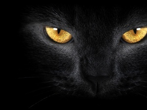 Black, Golden, Eyes, cat