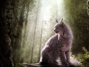 ligh, Lynx, flash, luminosity, sun, forest