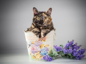 Flowers, cat, container