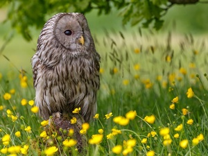 Owl, Bird, grass, Flowers, Meadow, owl