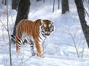 forest, tiger, winter