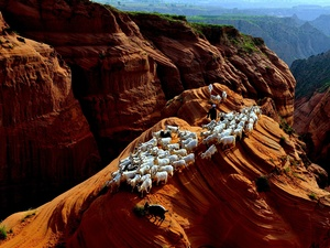 herd, Goats, Rock Formations, Mountains, rocks