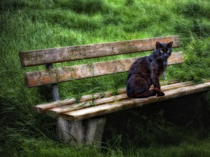 grass, cat, Bench