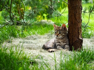 Gray, trees, grass, kitten