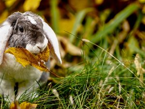 Rabbit, Yellow, leaf, grass