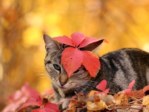 cat, an, Head, leaf