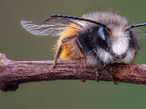 bee, Close, increase, twig