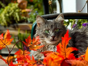 Leaf, cat, Autumn