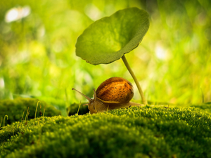 snail, Moss, Close, leaf