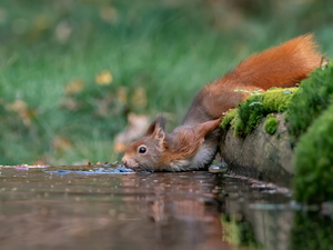 Moss, squirrel, water