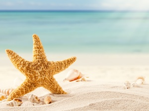 starfish, Sand, rays of the Sun, Shells