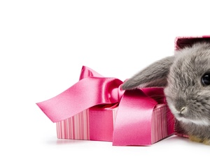 Rabbit, bow, Present, Box