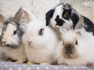 Rabbits, Blanket