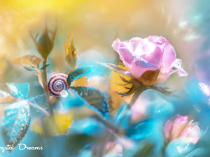 Flowers, snail, blur, rose