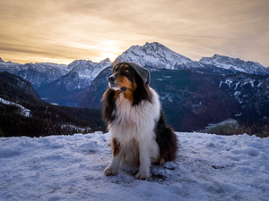 snow, Mountains, Australian Shepherd, Hat, dog