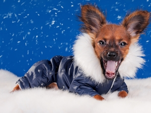 snow, graphics, doggy, clothes, funny