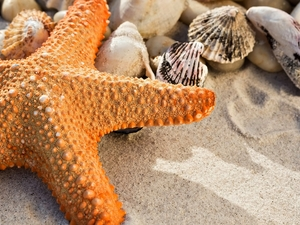 Orange, Shells, Sand, starfish