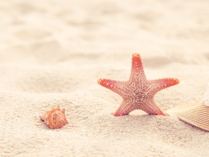 Sand, shell, Hat, starfish