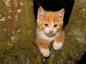small, kitten, trees, ginger