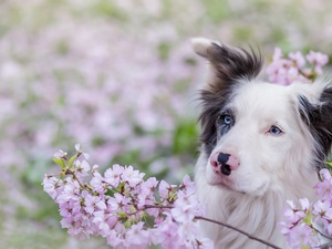 Flowers, Border Collie, Twigs
