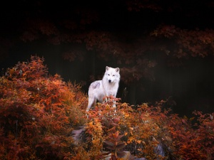 VEGETATION, White, Wolf