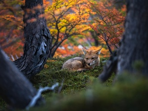 trees, lying, Fox, viewes