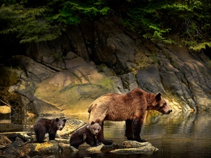 rocks, water, she-bear, young, Brown bear