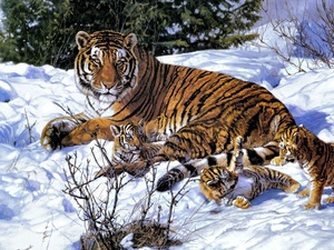 winter, Three, young, tiger